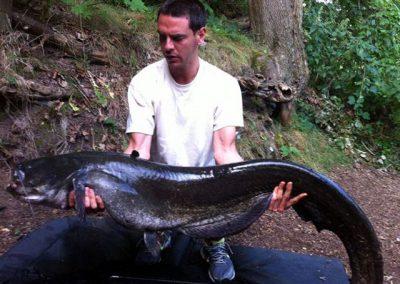 50lb Catfish