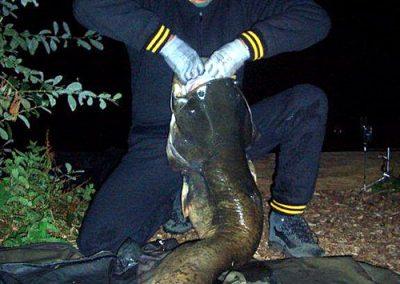 Catfish 53lb
